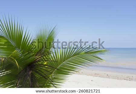 Palm Tree at beach in Costa Rica - Punta Leona, Puntarenas province, Central Pacific Coast, Costa Rica - stock photo