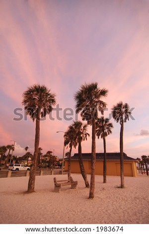 palm tree at clear water beach, florida - stock photo
