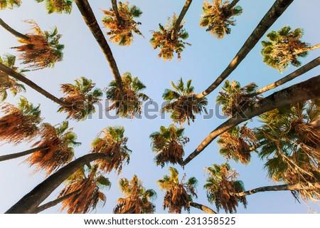 Palm tree at sunrise light. - stock photo