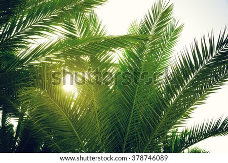 palm tree at sunset light