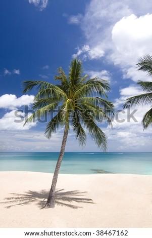 Palm tree at the beach - stock photo