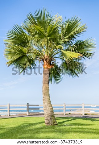 Palm tree at the end of Route 66 with the Pacific Ocean in the background, in Palisades Park, Santa Monica, California. - stock photo