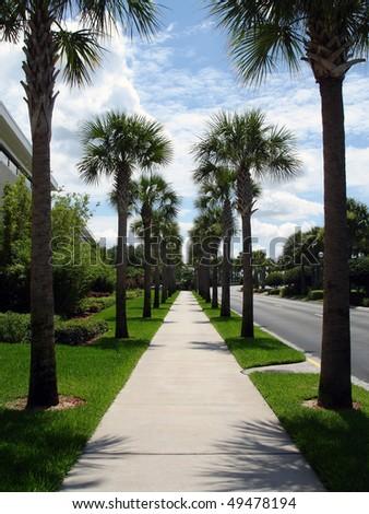 Palm tree avenue - stock photo