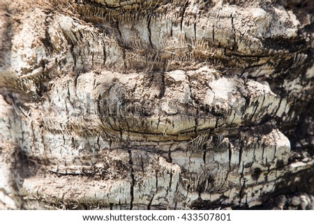 Palm tree. Background texture of tree bark