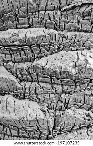 Palm Tree Bark Detail and Texture - stock photo