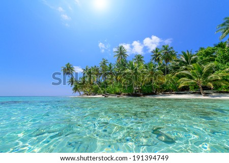 Palm Tree Beach - stock photo