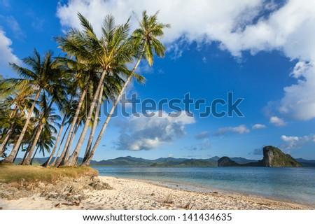 Palm tree beach in Philippines - stock photo