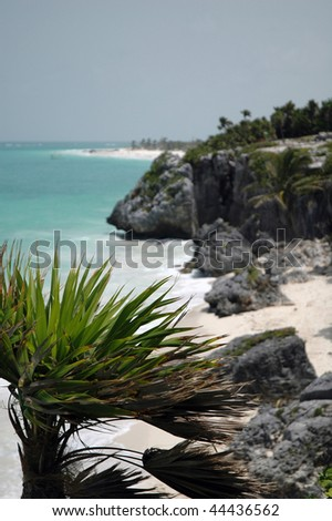 Palm tree blowing in the wind - stock photo