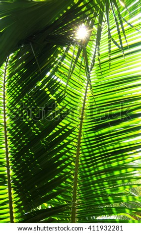 Palm tree branch against the light on the tropical beach. - stock photo