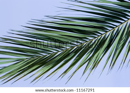 Palm tree branch and clear blue sky