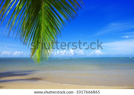 Palm tree branch and tropical beach on Caribbean sea as background.