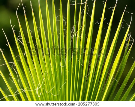Palm Tree Branch Closeup At Sunset Light - stock photo