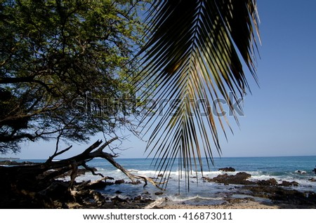 Palm tree branch over reefs of Puako Beach, Big Island, Hawaii - stock photo