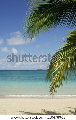 Palm tree branches hanging over sandy beach, ocean in background, Coiba island, Panam�¢?�¡, Central America - stock photo