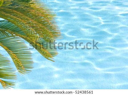 Palm tree branches rest over swimming pool