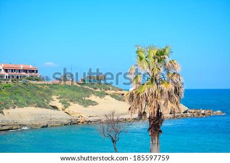 palm tree by Porto Torres seashore - stock photo