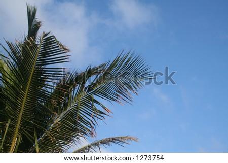 Palm tree corner - stock photo