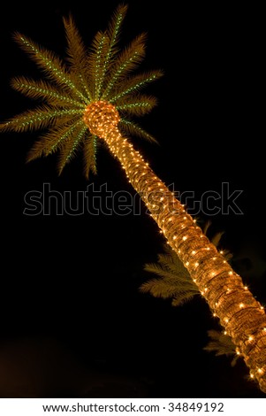 Palm tree covered in festive Christmas lights shot at night.