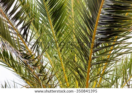 Palm tree detail on Mediterranean coast, Greece