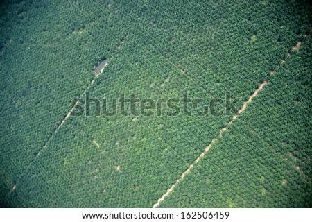 palm tree farm vertical view - stock photo