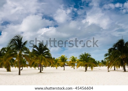 Palm tree forest near ocean - stock photo