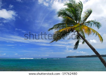 Palm tree hanging over a tropical bay in Kauai, Hawaii - stock photo