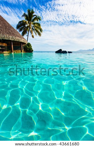 Palm tree hanging over infinity pool and ocean - stock photo