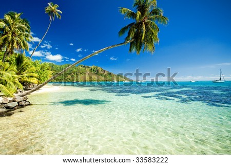 Palm tree hanging over stunning lagoon with blue sky - stock photo