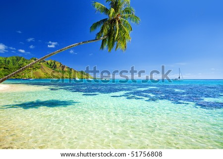 Palm tree hanging over stunning lagoon with blue sky