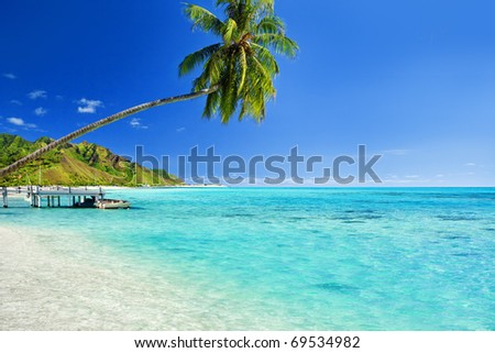 Palm tree hanging over stunning lagoon with jetty - stock photo