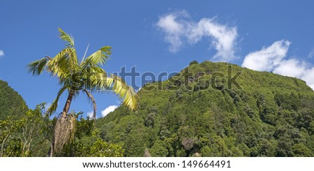Palm tree in a blue sky above the Azores - stock photo