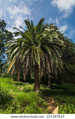 Palm tree in a botanical garden