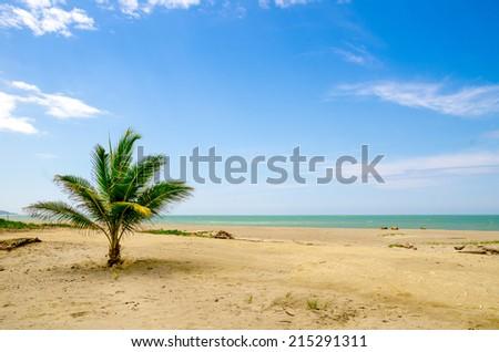 palm tree in beautiful tropical deserted beach in the coast of ecuador - stock photo
