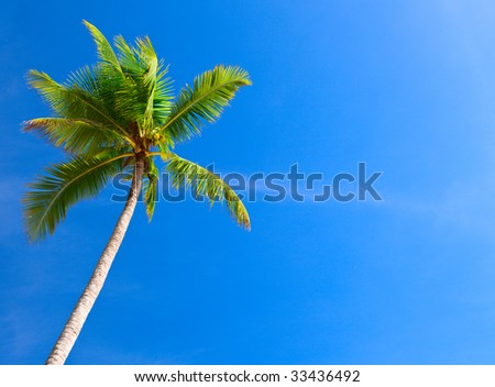 Palm tree in blue sky - stock photo