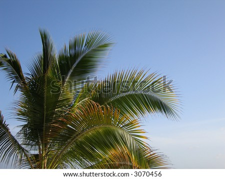 Palm Tree in Curacao - stock photo