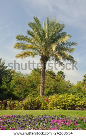 Palm Tree in Dubai, United Arab Emirates