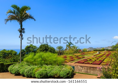 Palm tree in famous Tropical Botanical Gardens in Funchal town, Madeira island, Portugal  - stock photo