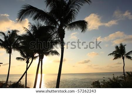 Palm Tree in Florida Keys - stock photo