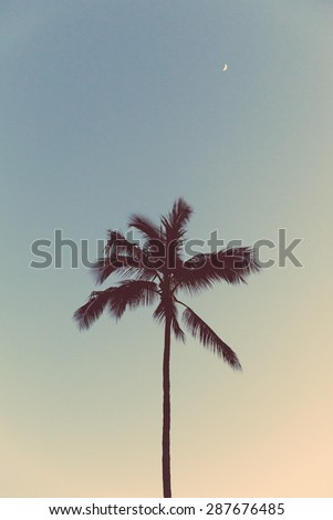Palm tree in Hawaii at night with half moon