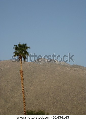 Palm Tree in Palm Springs
