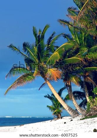 Palm Tree in Rarotonga, Cook Islands - stock photo