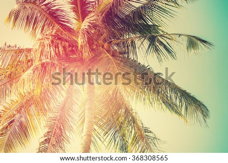 Palm Tree in Sun Light. Holiday Travel Tropical Adventure Resort. Vintage Toned Background Pastel Effect - stock photo