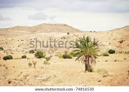 Palm tree in the desert.