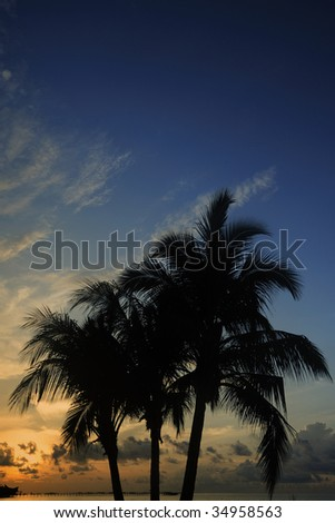 Palm Tree in The Morning