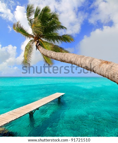 Palm tree in tropical perfect beach at Balearic islands [ photo-illustration] - stock photo