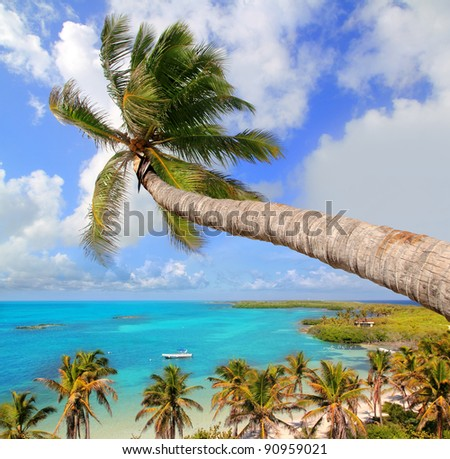 Palm tree in tropical perfect beach at Cancun [ photo-illustration] - stock photo