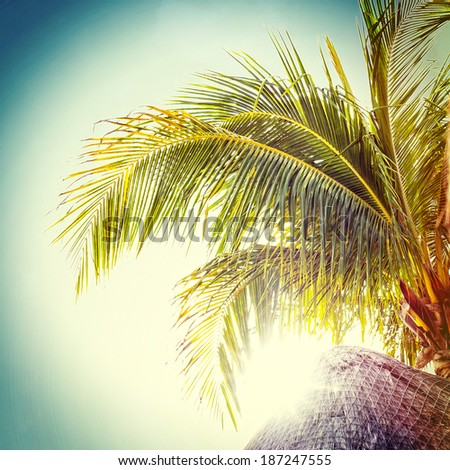 Palm tree, instagram style - stock photo