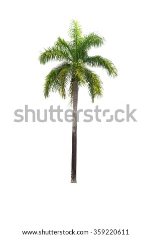 palm tree isolated on white - stock photo