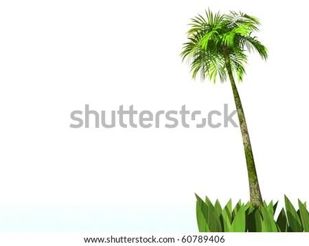 palm-tree isolated on white - stock photo