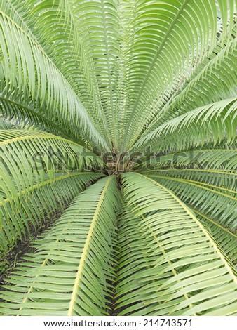 palm tree leaf - stock photo